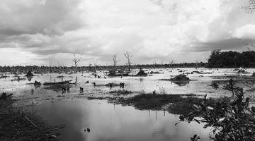 Siem Reap Wetlands
