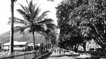 Main Street Palm Island showing mango trees and palms